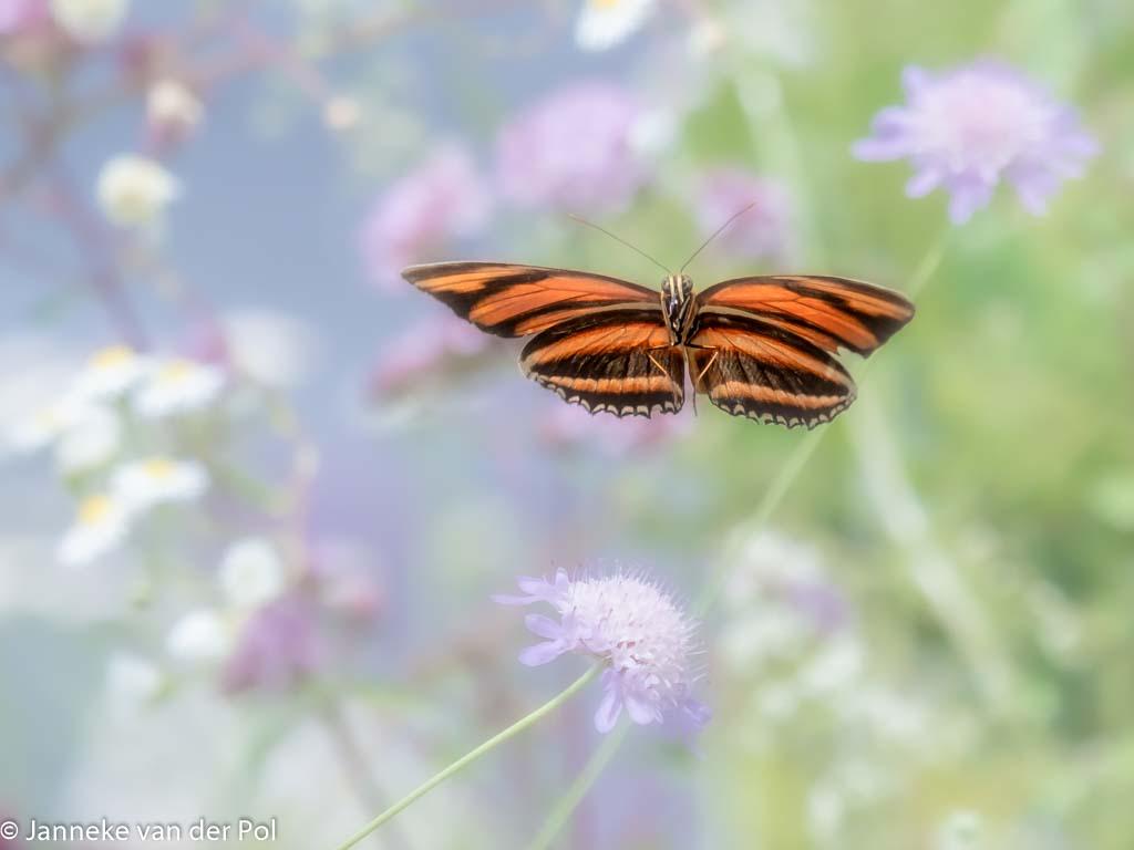Ren jij ook weleens een vlinder achterna?