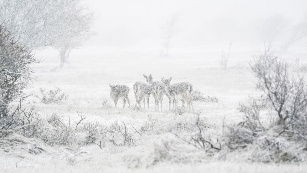 AWD met sneeuwstorm