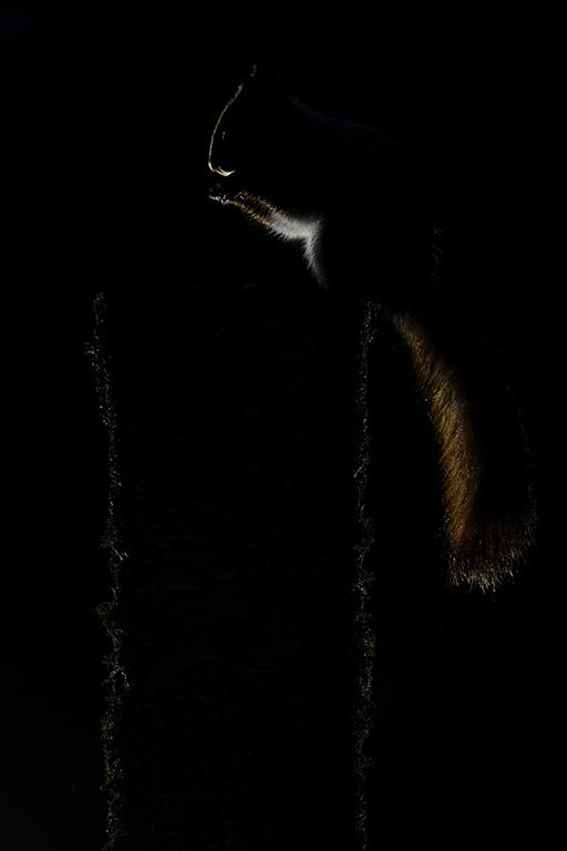 Eekhoorn, Finland