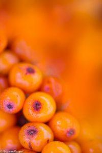 Oranje! - Fotograaf: Nico van Kappel