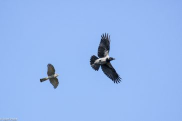 Vogels in de vlucht