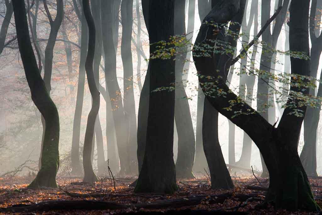 De 10 mooiste herfstbossen