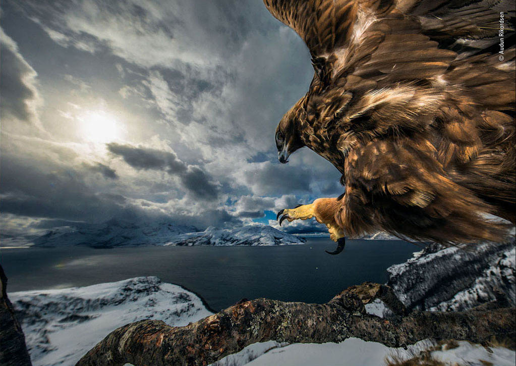 Wildlife Photographer of the Year 2019 – De winnaars!