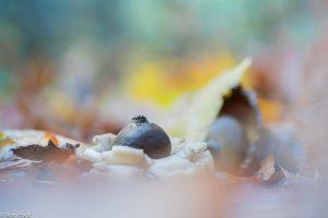 Met een macrolens kun je de voor- en achtergrond mooi laten vervagen. - Fotograaf: Ron Poot