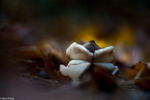 Je kunt de herfstsfeer benadrukken door onder te belichten en te spelen met licht en donker. - Fotograaf: Ron Poot
