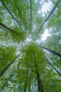 Mist in voorjaarsbos. - Fotograaf: Nico van Kappel
