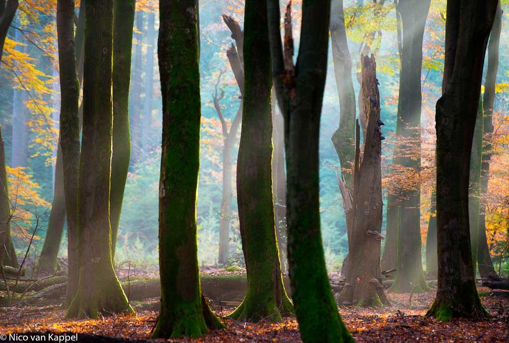 De beuk, een veelzijdige boom
