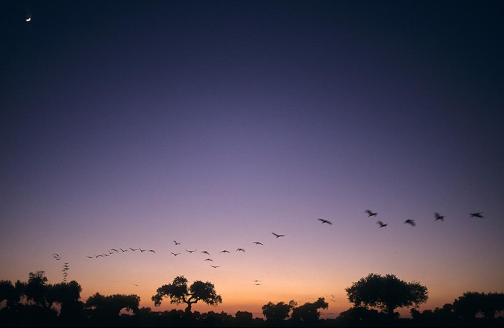 Slaaptrek van kraanvogels in Spanje