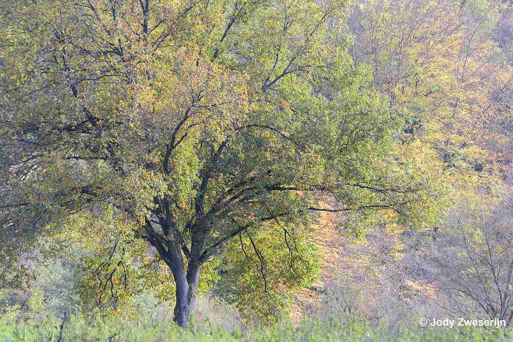 Natuurfotografie kalender voor november