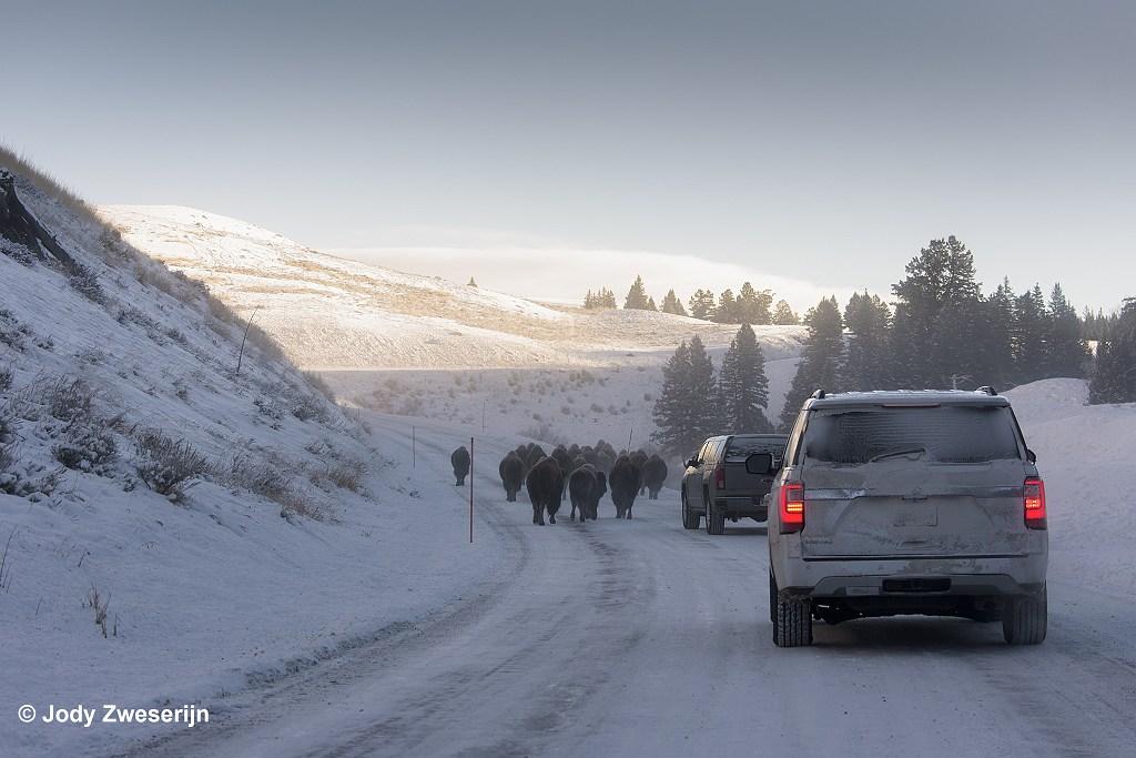 Met eigen vervoer in Yellowstone NP