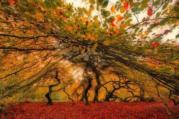 Winnaar Photo Challenge het bos
