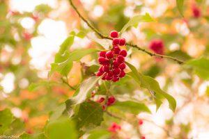 Herfstbladeren op de achtergrond geven extra kleur in beeld. - Fotograaf: Ron Poot