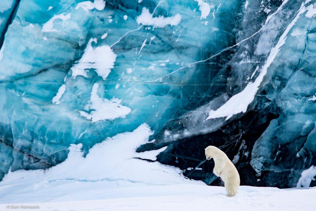 IJsbeer voor gletsjer