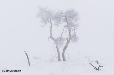 Sneeuw op de Hoge Venen