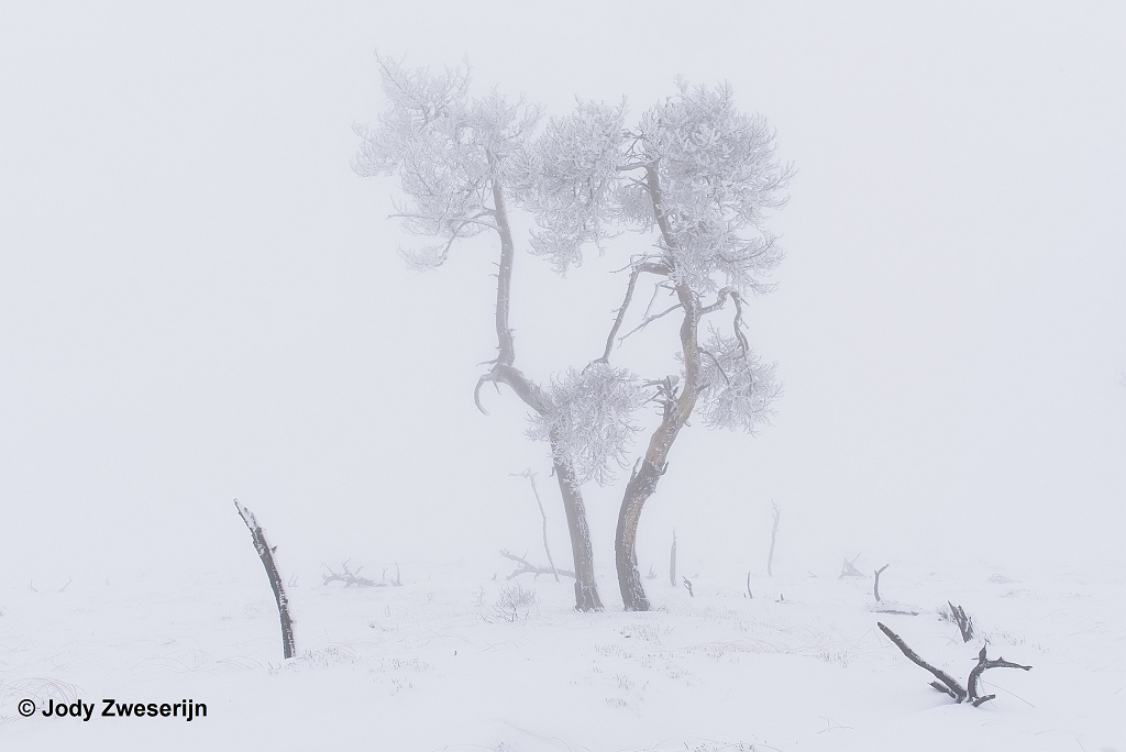 Natuurfotografie kalender voor december