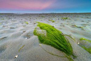 Darmwier bij laagwater. - Fotograaf: Nico van Kappel