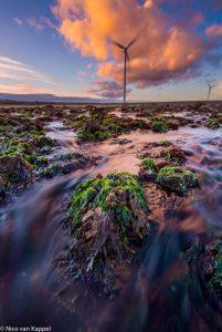 Zeewieren bij laagwater op Neeltje Jans. - Fotograaf: Nico van Kappel