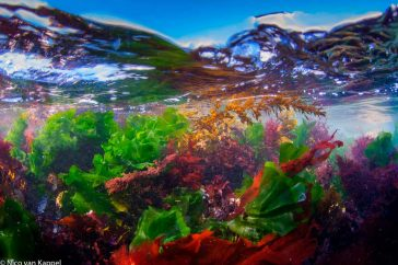 Zeewier; seaweed