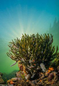 Viltwier op oesterrif. - Fotograaf: Nico van Kappel