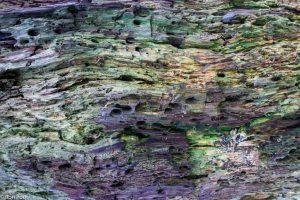 Een vermolmde knotwilg vol structuren en kleurschakeringen. - Fotograaf: Ron Poot