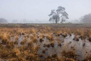 Landschapsfoto waarin naast de vliegden pijpenstrootje een belangrijke rol speelt. - Fotograaf: Ron Poot