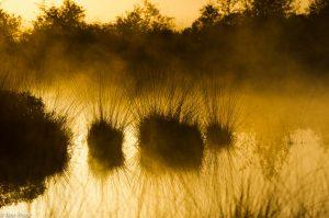 Ochtendmist boven de veenplassen met pollen pijpenstrootje in de Engbertsdijksvenen. - Fotograaf: Ron Poot