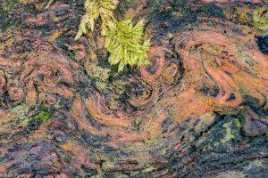 Dood hout heeft soms verrassende patronen en kleuren. - Fotograaf: Ron Poot