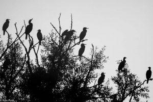 Silhouetfoto in zwart-wit.  - Fotograaf: Ron Poot