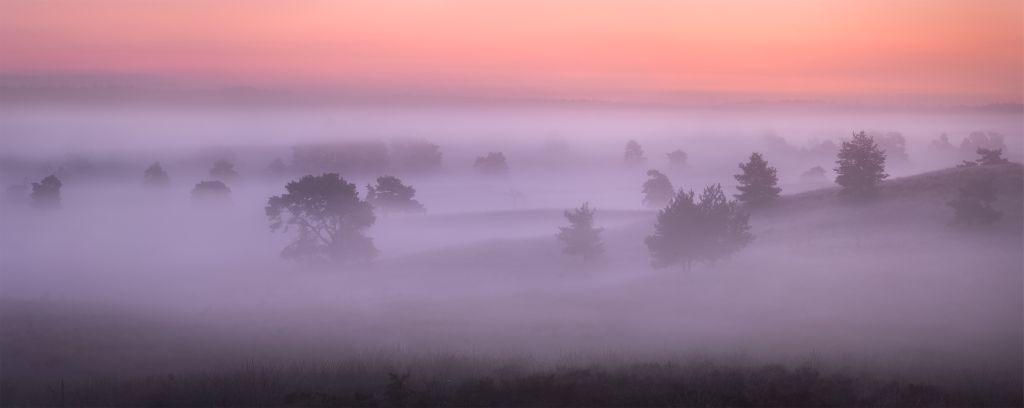 Mist boven de Veluwe