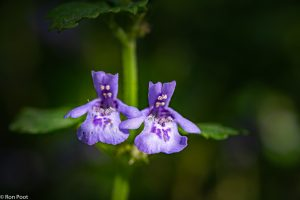 Twee bloemen uitgelicht. - Fotograaf: Ron Poot