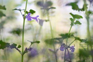 Spelen met licht en een lekker rommelige sfeer in de vegetatie. - Fotograaf: Ron Poot