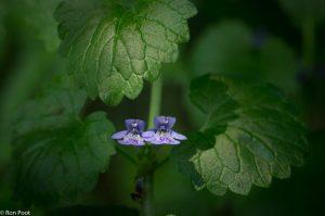 Twee bloemen uitgelicht door een zonnestraal die door de vegetatie brak. - Fotograaf: Ron Poot