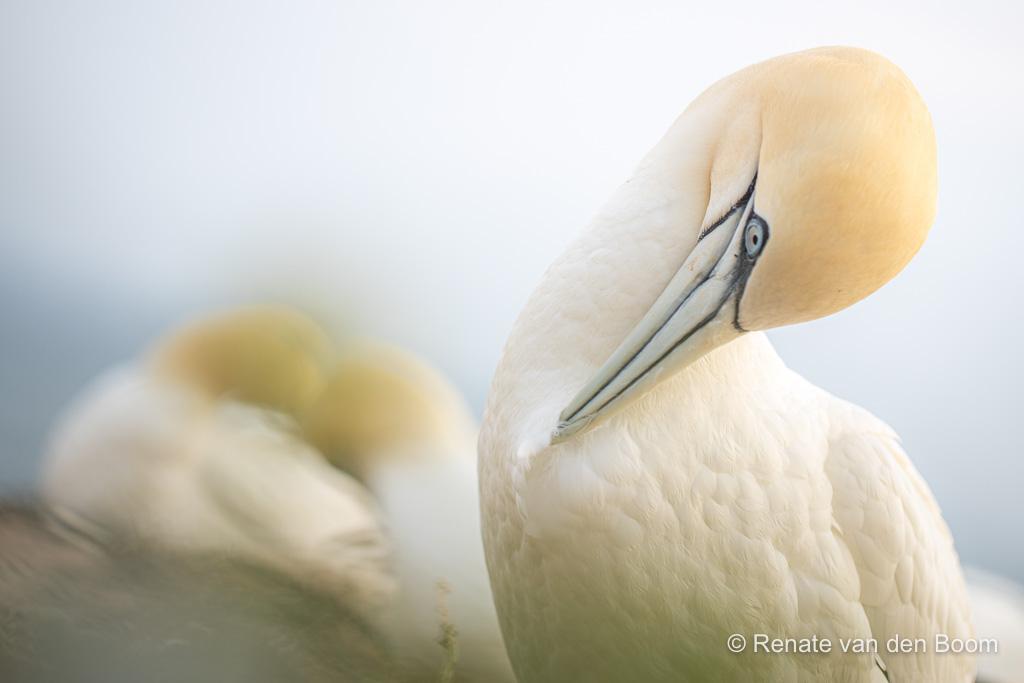 Het morele kompas van de natuurfotograaf: Wat zou jij doen?