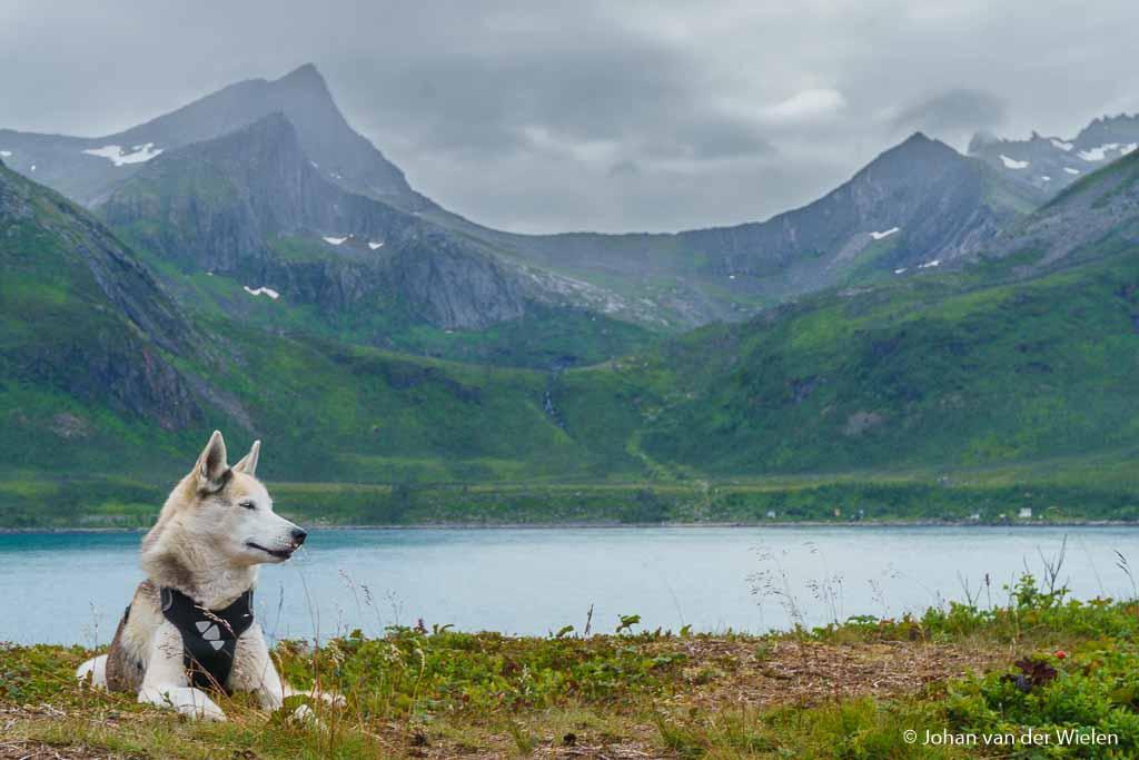 Natuurfotografie met/ondanks/dankzij*… mijn hond