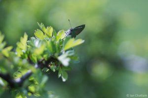 Ook de voorkant van het groentje is fotogeniek. - Fotograaf: Ian Chattam
