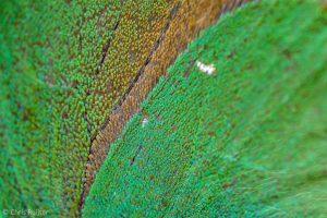 Bijna abstract als je de vleugels met 5x vergroot. - Fotograaf: Chris Ruijter
