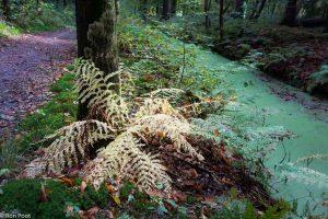 Landschapsfoto met varens op de voorgrond, in herfstkleuren. - Fotograaf: Ron Poot