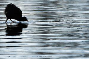 Een mooie houding en een spannende compositie, daar let je op als fotograaf. - Fotograaf: Danny Slijfer