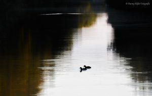 Klein in beeld maar met mooie contrasten in het landschap. - Fotograaf: Danny Slijfer