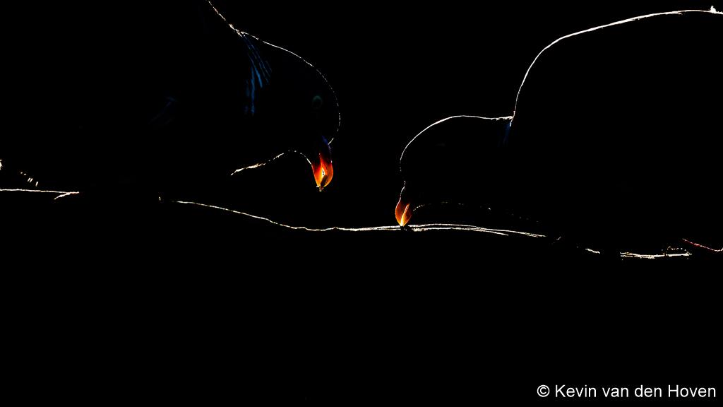 Silhouetten en tegenlicht fotograferen met keihard licht