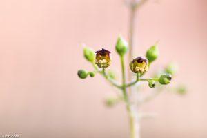 Een paar bloempjes tegen een zachte achtergrond (een bakstenen muur).  - Fotograaf: Ron Poot