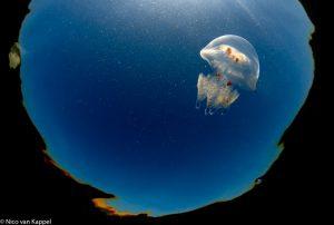 Een jonge zeepaddenstoel.  - Fotograaf: Nico van Kappel