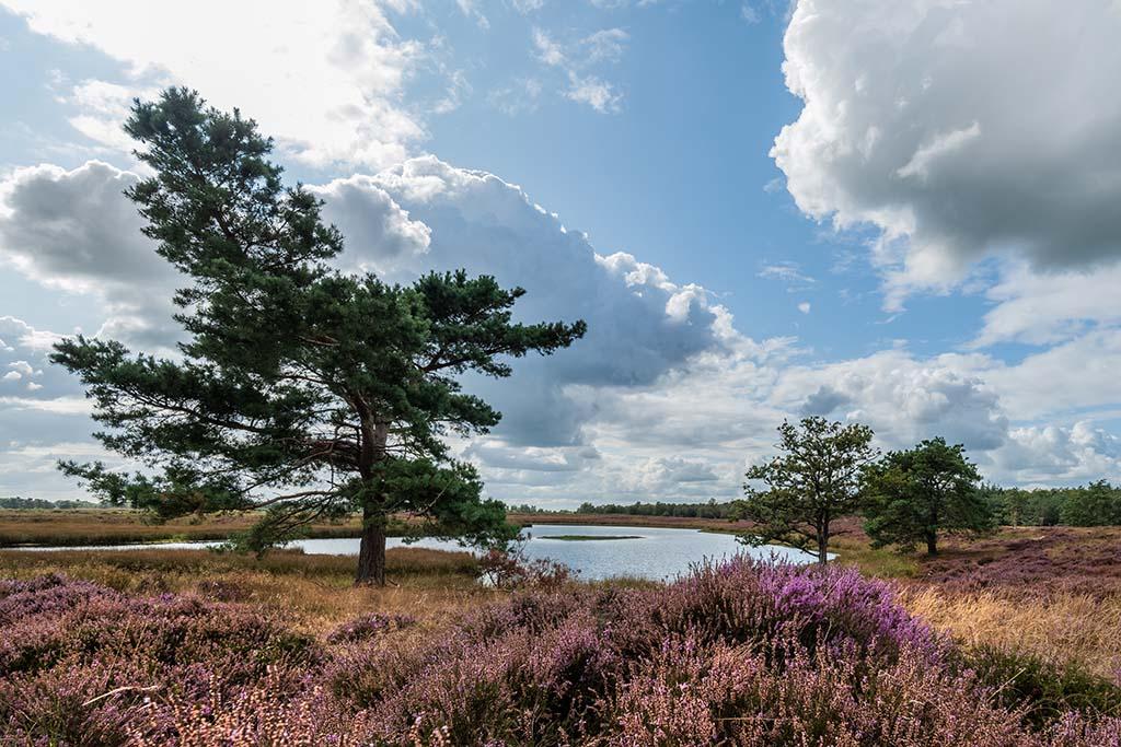 Gebieden fotograferen Natuurfotografie.nl:Hijkerveld