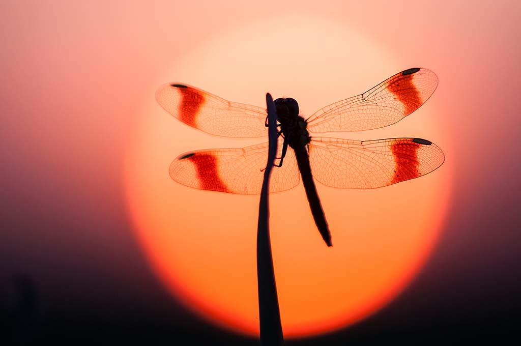 De beste libellengebieden