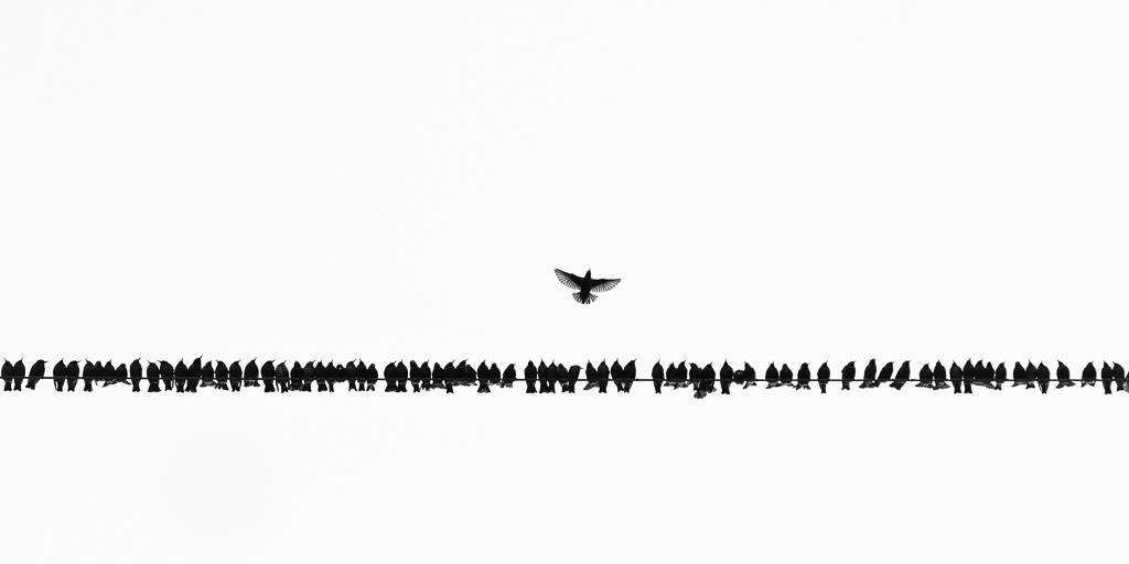 Natuurfotografie op basis van een IDEE: deel 2 – Voorbeelden