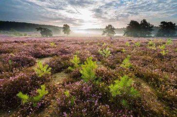 Heidelandschap – De Teut