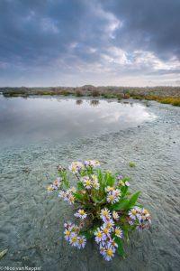 Zeeaster en zeekraal in herfstkleuren. - Fotograaf: Nico van Kappel