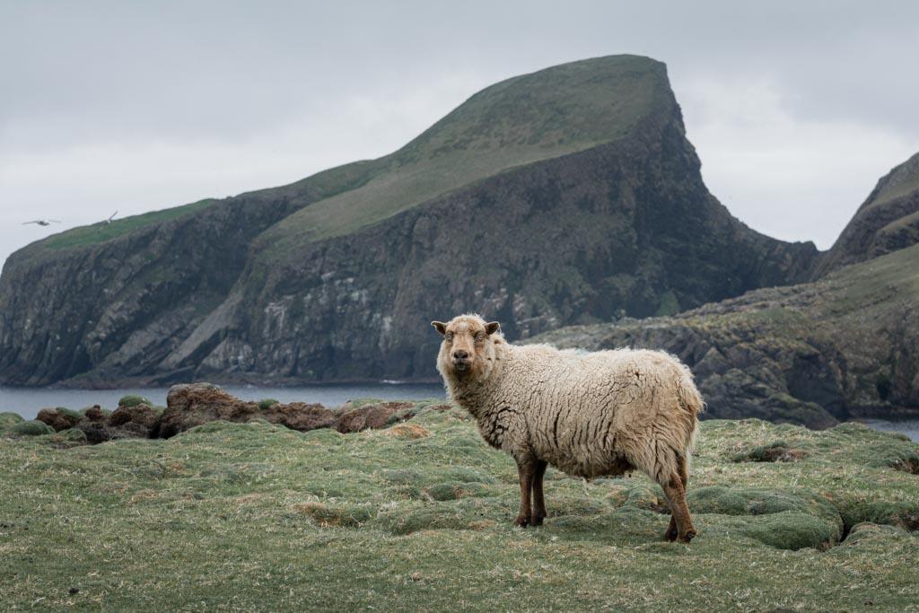schaap Sheep Rock