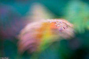 Met geringe scherptediepte kun je spelen met de bladvorm. In de nabewerking extra verzadigd om de kleuren te accentueren. - Fotograaf: Ron Poot