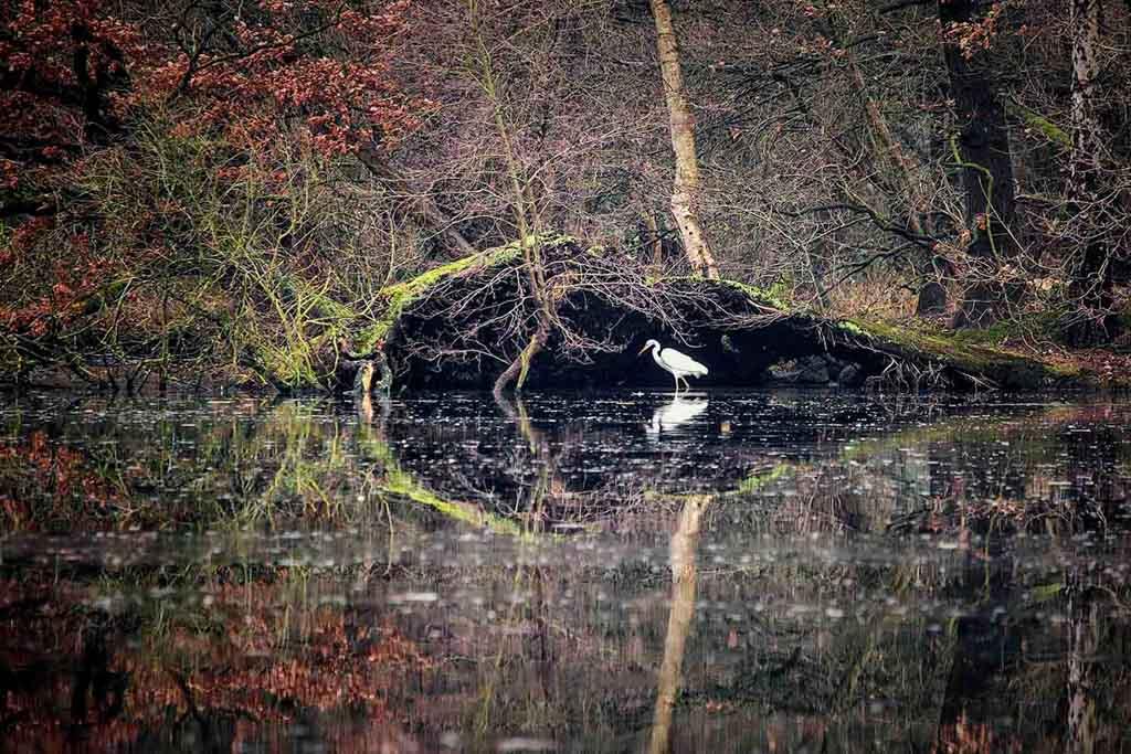 Min of meer Natuurfotograaf